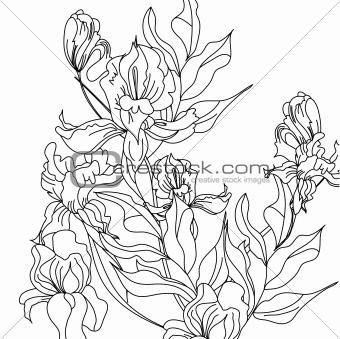 Sketch with Iris flowers