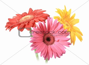 Bouquet of three flowers