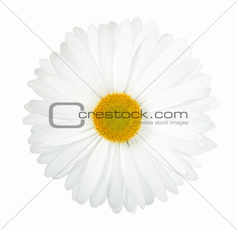 One white flower