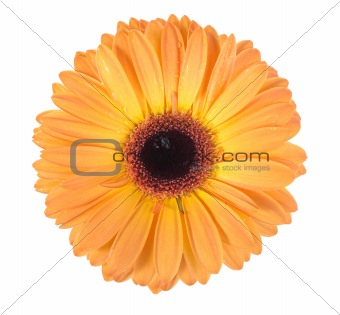 One orange flower