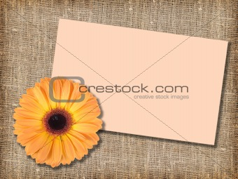 One orange flower with message-card