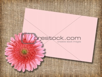 One pink flower with message-card