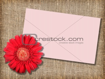One red flower with message-card