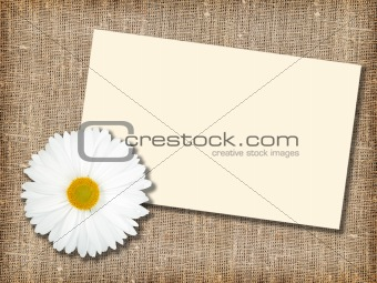 One white flower with message-card