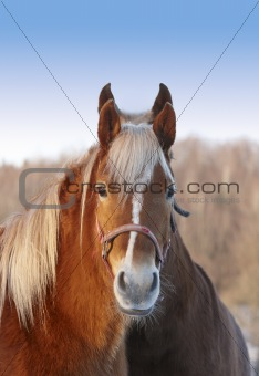 A photo of a beautiful brown horse in wintertime