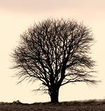 A concept photo of a lonely tree - lots of copyspace