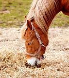 Beautiful brown horse outdoor at daytime