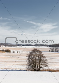A photo of a beautiful winter landscape in Denmark