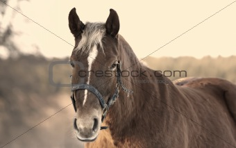 A beautiful brown horse outdoors at sunset