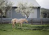 Horse in pasture