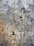 crannied plaster