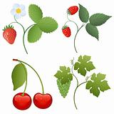 Isolated image of a berries. Vector illustration.