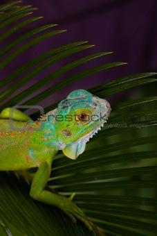 Gecko concept