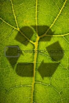 Green leaf and disaster shadow