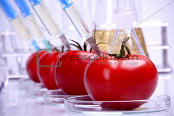 Genetic Food Modifications