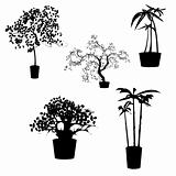 Apartment decorative trees