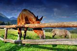 Horses, Dolomites, Italy, August 2007