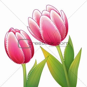 red tulip flower with leaves