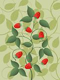Floral background with a raspberry