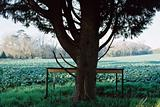 Tree in a field with table