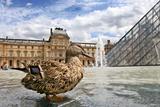 Louvre #4.