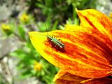 Green Insect On Flower