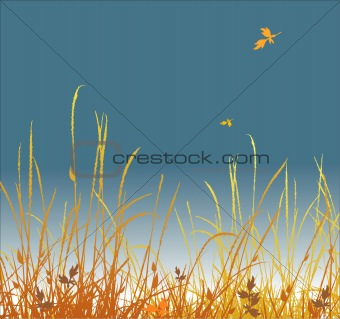 autumn grass vector background