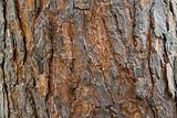 Pine bark