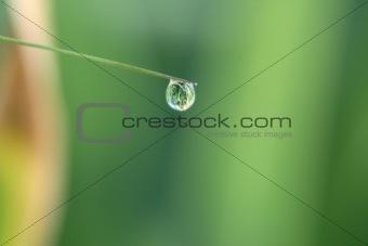 Small dewdrop
