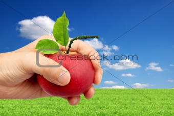 An apple in the hand