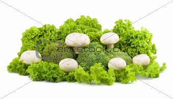 Champignon on a lettuce