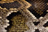 Close-up of Python regius' snakeskin