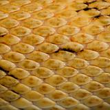 Close-up of Trans-Pecos rat snake scales, Bogertophis suboculari