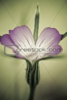 Single fine art romantic flower