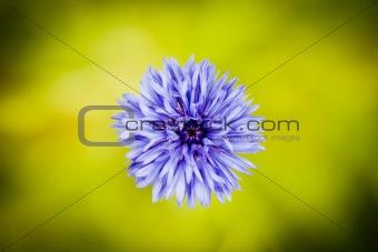 Single fine art romantic flower