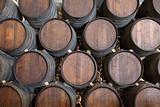 Wooden barrels in a wine cellar