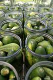 Making pickles