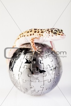 Gecko in globe