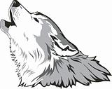 Wolf head vector