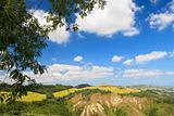 Italian landscape with vineyard in summer