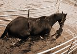 horse in aqua walker