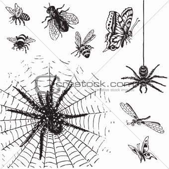 antique insects set (vector)