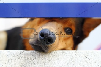 alone sad dog muzzle portrait looking little hole