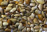 Tellinidae Sunrise tellin clams pattern