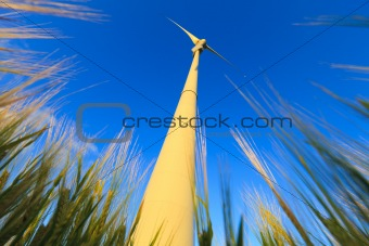 wind turbine in a field of wheat in summer with a blue sky