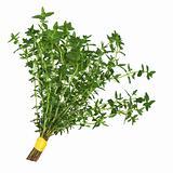 Thyme Herb Leaf Posy
