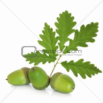 Acorns and Oak Leaf Sprig