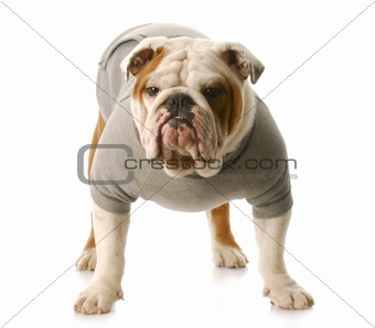 tough dog
