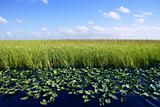 beautiful everglades in florida