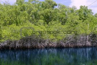 beautiful everglades in florida